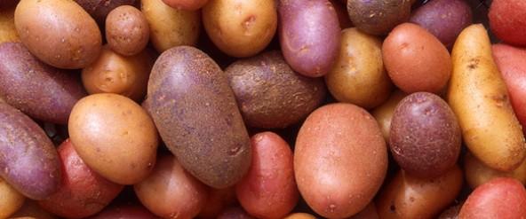 Is de aardappel terug van weggeweest?